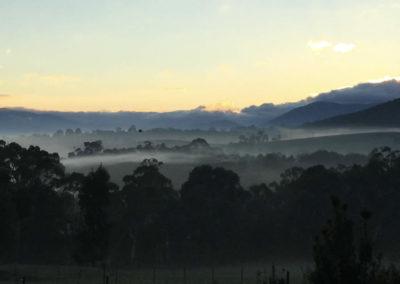 sunrise-grevillea-rise